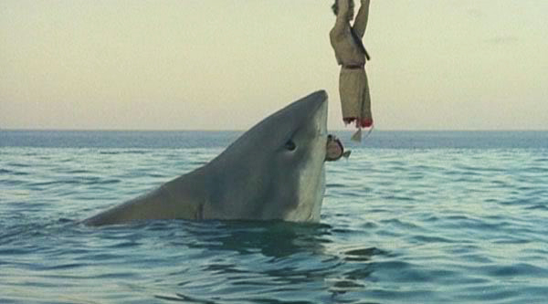 last shark 2